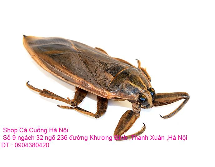 a1-con-ca-cuong-14-jpg.41777