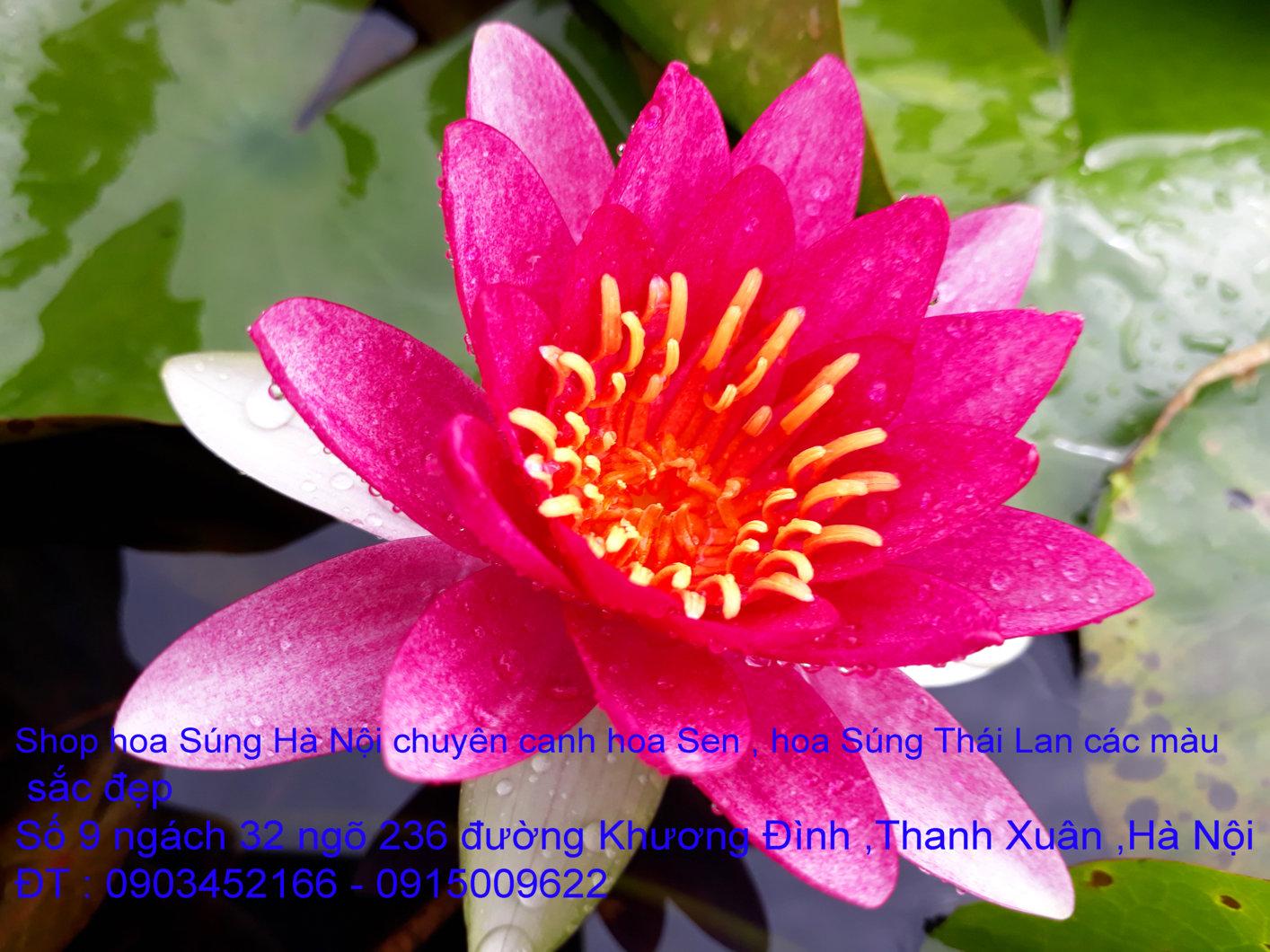 a1-sung-do-2-jpg.42171