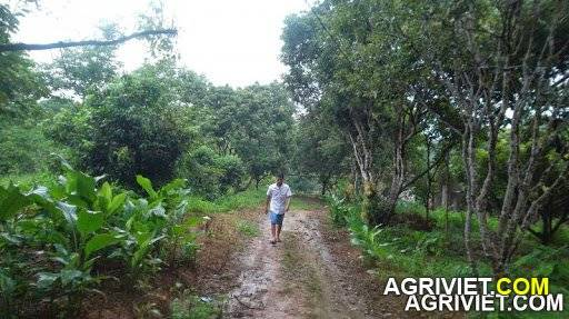 Agriviet.Com-resizeSAM_1819.jpg