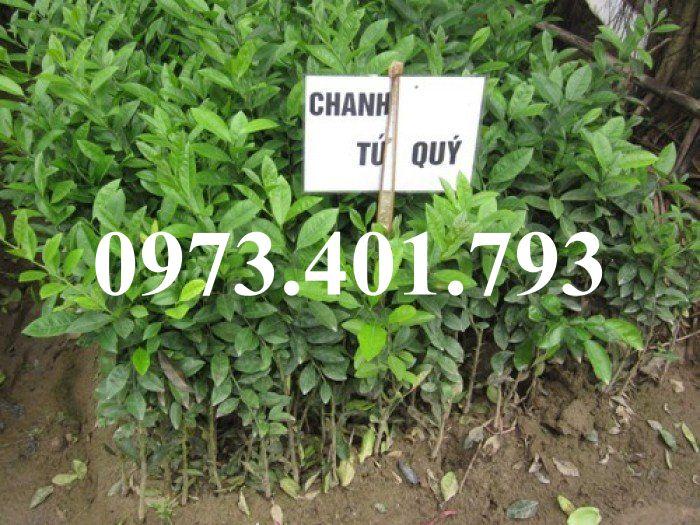 chanh-tu-quy1_result-jpg.45857