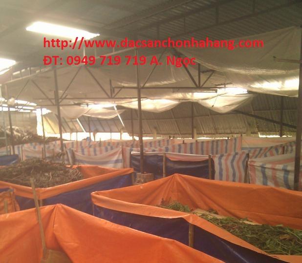 chuong-nuoi-de-thai-jpg.24745