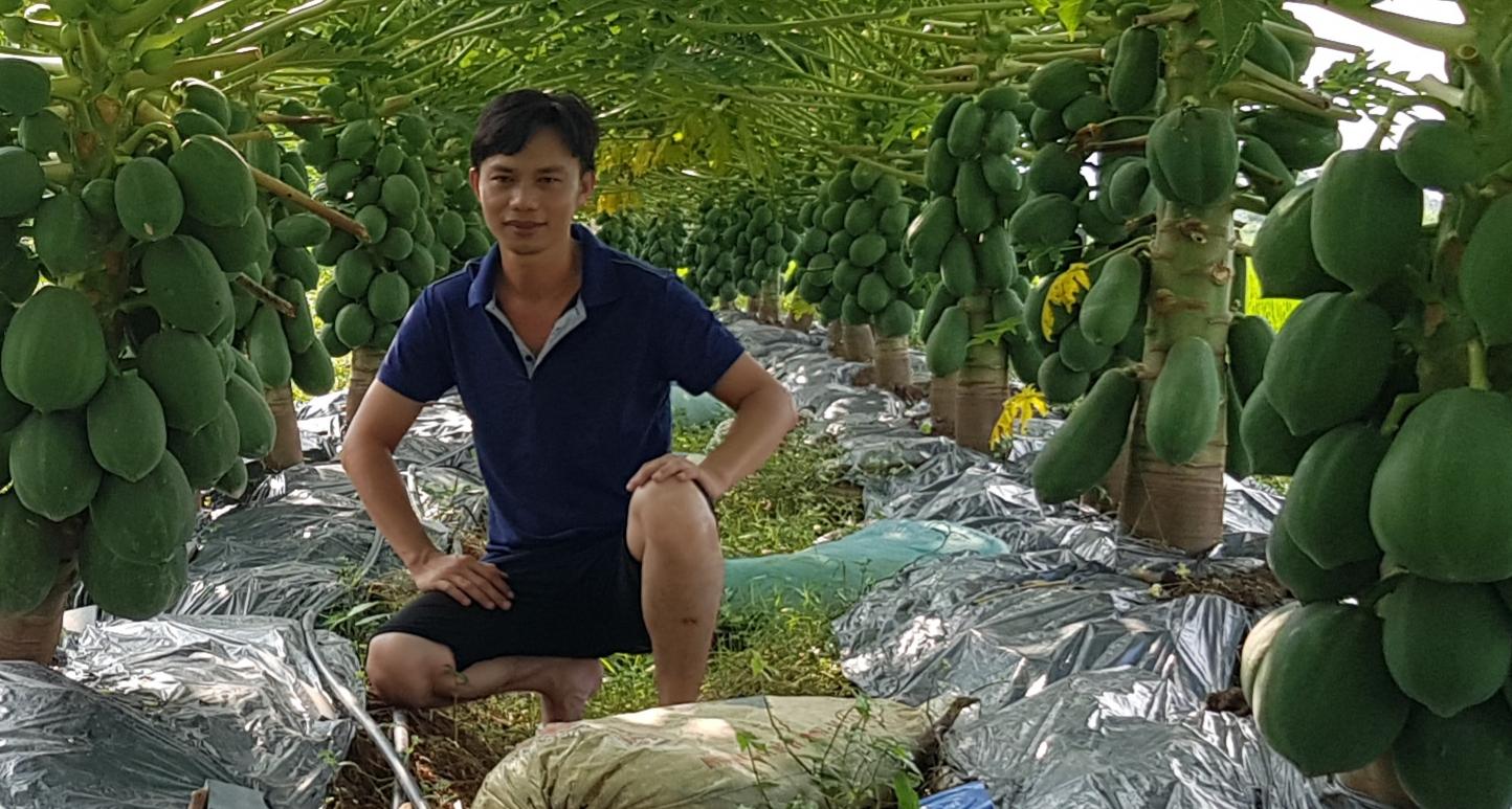 du-du-ruot-vang-haclong-hac-long-sieu-ngon-ngot-dep-vua-trai-cay-thao-phuong-ban-si-buon-le-ha-jpg.49826