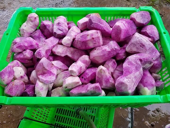 Bán Khoai mỡ Tím Long An  giá sĩ tại TP.HCM và Toàn Quốc