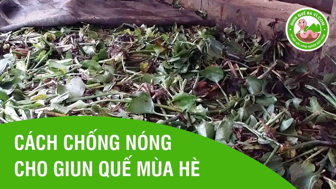 nuoi-trun-que-bang-luc-binh-jpg.49492